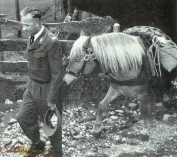 Haflinger bei der Bundeswehr