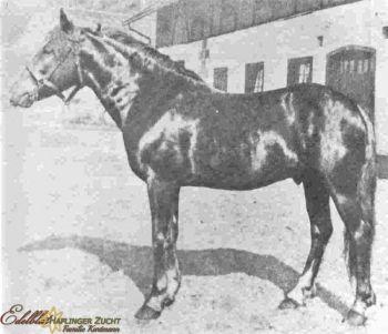 Haflinger 1925
