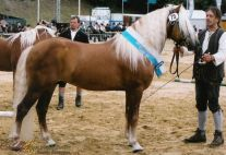 Monarch ZLF  Klassensieger 2004