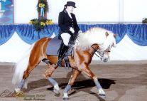 Monarch Hengstpräsentation 2008