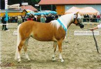Alice ZLF Klassensieger 2000